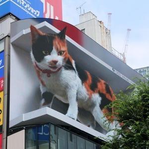面白い!3Dの猫、海外で反響 東京の巨大広告「キャジラ」