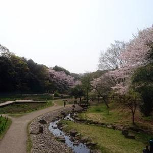 泉の森でお花見