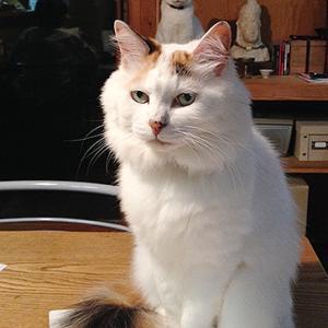 頭の上に猫をのせた猫