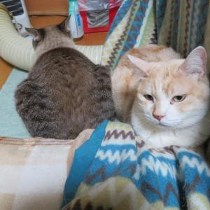 3猫団子。