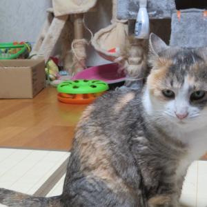 猫どもの体重測定、115回。
