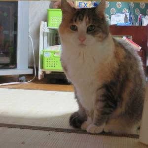 116回、猫どもの体重測定。