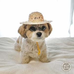 ペット用麦わら帽子だよ!