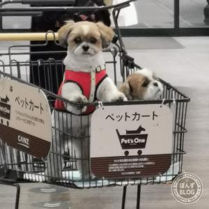 猛犬注意(- -;
