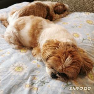 寝、尻、寝