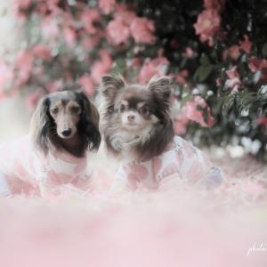 寒い季節にピンクのお花