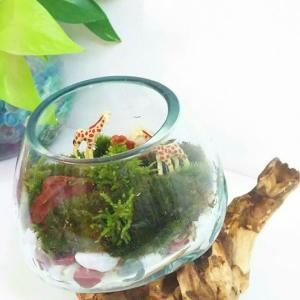 【残3席】流木ガラス テラリウム ワークショップ&苔のメンテナンス会