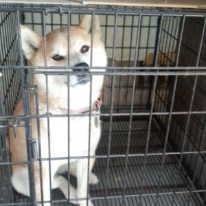 6月17日 福岡県大木町Ⅰ様犬と猫の病院地縄張り打合せ