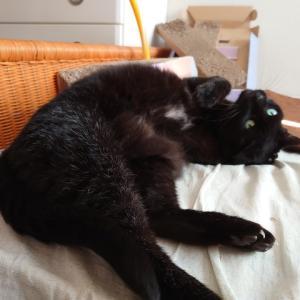猫には強気 スマホには弱気