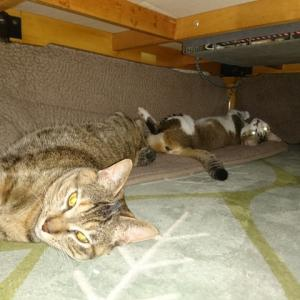 猫用炬燵トンネル