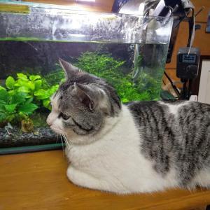 自粛生活。熱帯魚のススメ