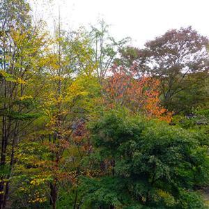 気がつけば、軽井沢は紅葉シーズンが始まっていました