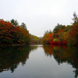 今週末の雲場池は、きっと紅葉が見頃です