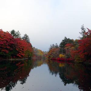 雲場池の紅葉、どうやらピークを迎えました