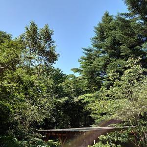 久しぶりに一日晴れた軽井沢