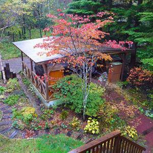 2020軽井沢の紅葉情報-4 我が家のヤマボウシが今年はきれいに色づく