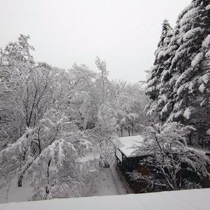 軽井沢は今シーズン初の大雪で、我が家の雪かき道具総動員