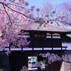 小諸・懐古園の桜
