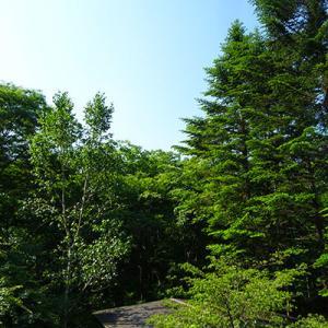 木が茂りすぎて、スマホの電波が入りにくく