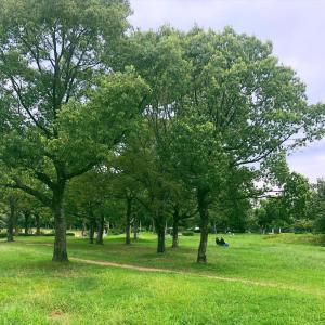 都市公園を活用した街づくり