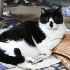 猫の日、記念日、尿検査