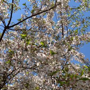 葉桜に想う🌸
