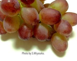 「水本果樹園」さんのブドウ「甲斐路」