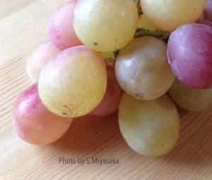 「水本果樹園」さんのブドウ「安芸クイーン」