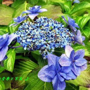 Blue Mitchell  (2)