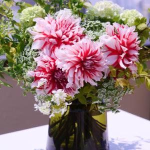 ダリア ららら 楽しくなるような・・・癒される花