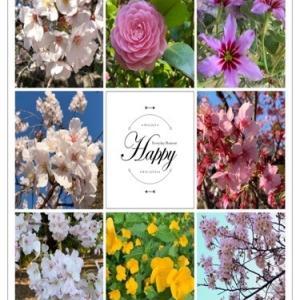 在宅ワーク~運動不足解消週末の散歩で出会ったお花たち