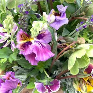 春の花 我慢強くて繊細で優しい花が多いですね・・・