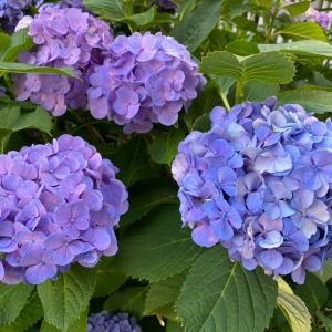 ○美しさを味わう心が、仕事を通じてひとに喜びを届けるエネルギー源となる。