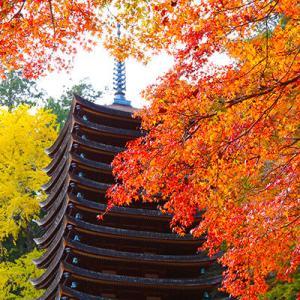 奈良・談山神社のモミジです。