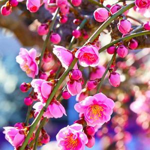 春よ、来いのメッセージ