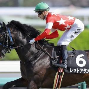 今週川田騎手で出走!レッドアダン近況(5/20)