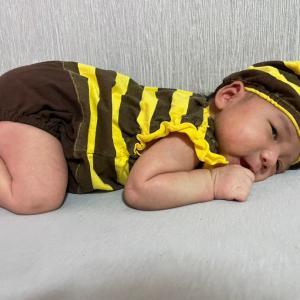 ミツバチハッチ
