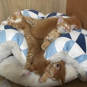 子猫の下痢、ピーンチ!