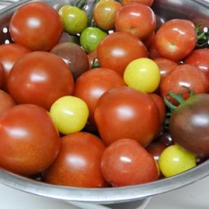 我が家のトマトとお漬物事情と最近の大変なこと