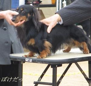 12月15・16日 徳島 2Day ~今年最後のドッグショー~