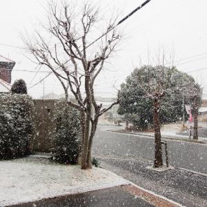 今日の空 02/04 雪のち晴れ
