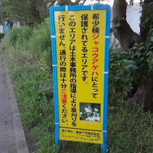 日本語、おかしくない?