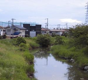 喜瀬川の立ち木撤去
