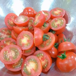 トマト酵母仕込んできました