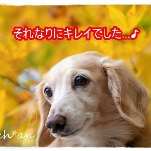 紅葉にハマる★
