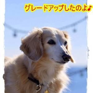 New迷子札♪
