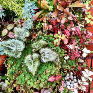 花がなくても華やかな玄関先&ネコネコガーデン |ωФ≡)