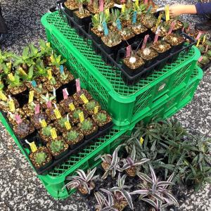 初めて実物を見た珍しい植物&イベント用多肉の寄せ植え(*Ü*)♬