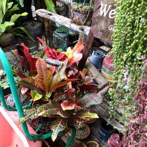 カラフルな観葉植物&キラキラをシックにペイント(*Ü*)♬