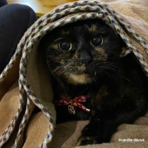 多肉花壇のメンテナンス&猫の気持ち |ωФ≡)オコゲ